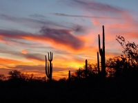 thumb_13_arizonasunset.jpg